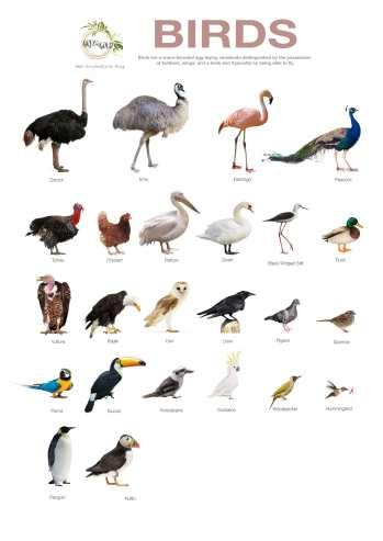 Birds-Poster-A4-By-www.Greyandgold.blog